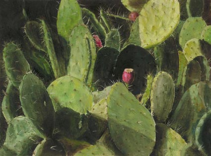 lynn freed cactus