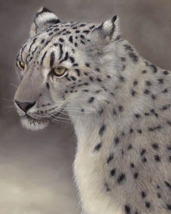 lynn freed snow leopard