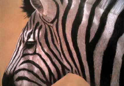 lynn freed zebra ii