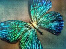 DeRubeis Butterfly