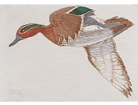 victor hohne mallard in flight