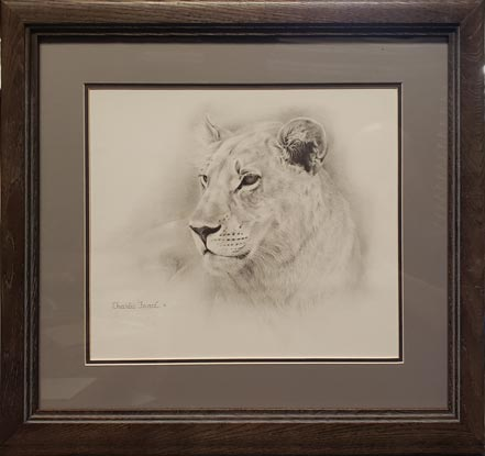 charles frace lioness