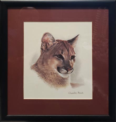 charles frace young cougar